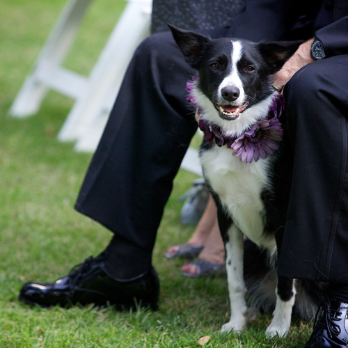 pet friendly wedding venue